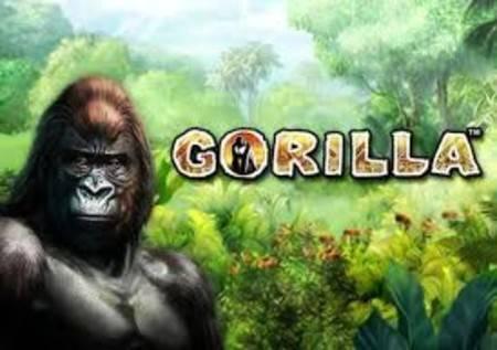 Gorilla – čuvar džungle čuva i veliko blago!
