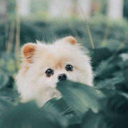 short-coat beige puppy behind green leaves