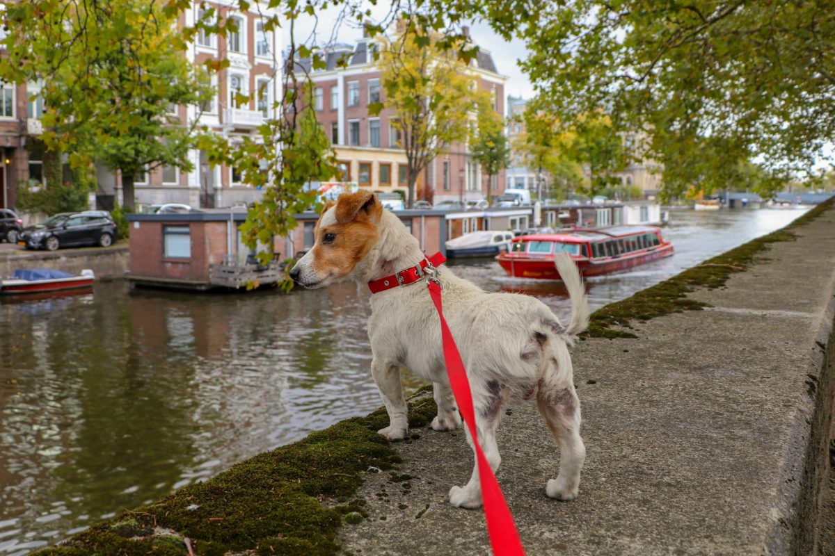 white and brown short coated dog on water