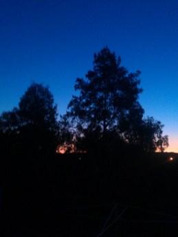 Evening sun...x