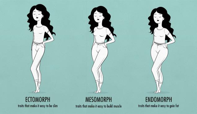 female body shapes & somatotypes—female ectomorph, endomorph, mesomorph