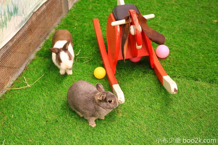 綠萼春風 兔兔花園