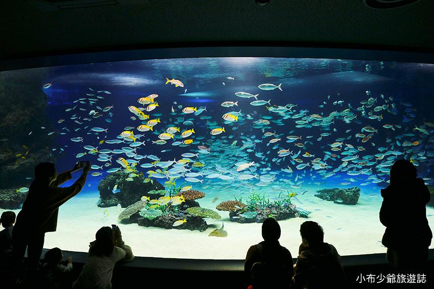 池袋太陽城水族館