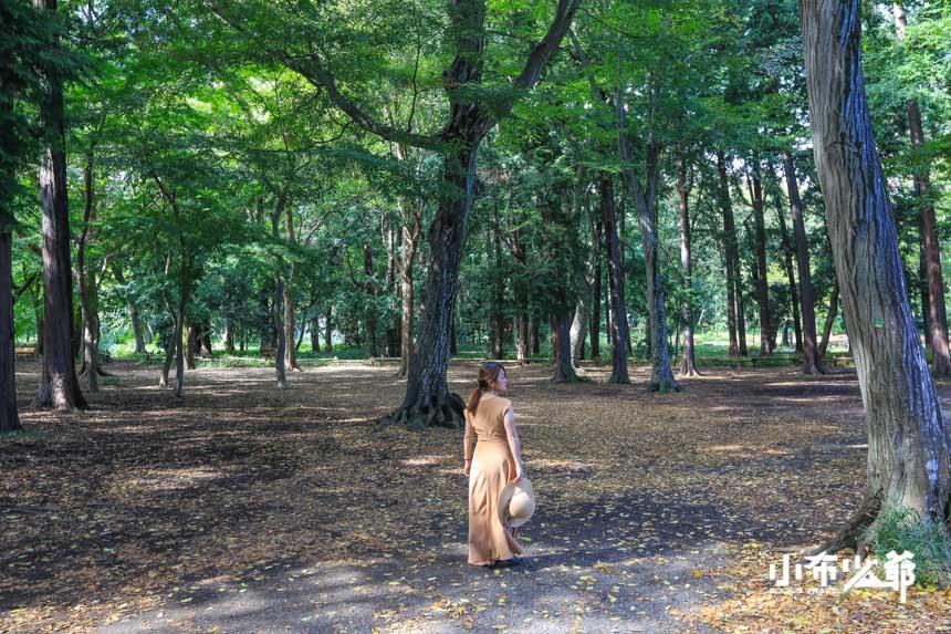 幕府御用林