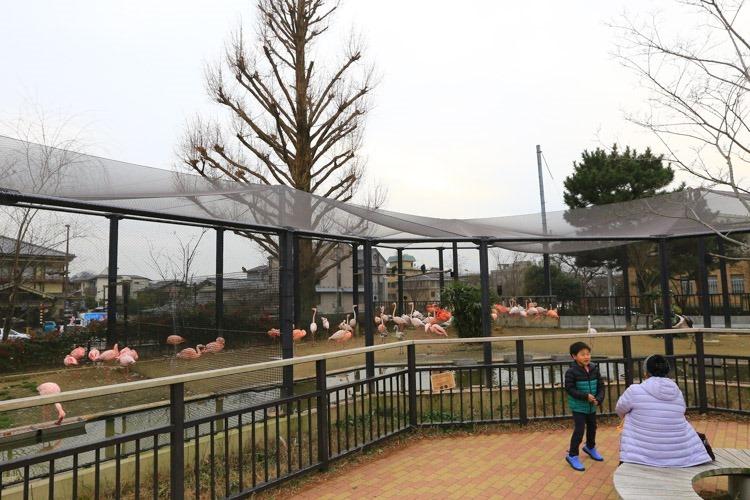 京都 動物園 (73 - 78)