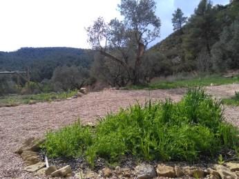 kitchen garden - green manure