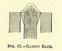 rabbit back