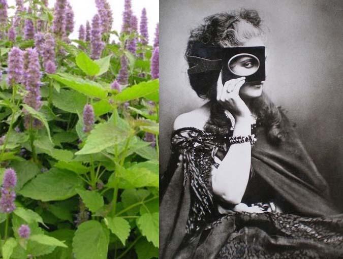 Lesley Blanch Archive | Patchouli