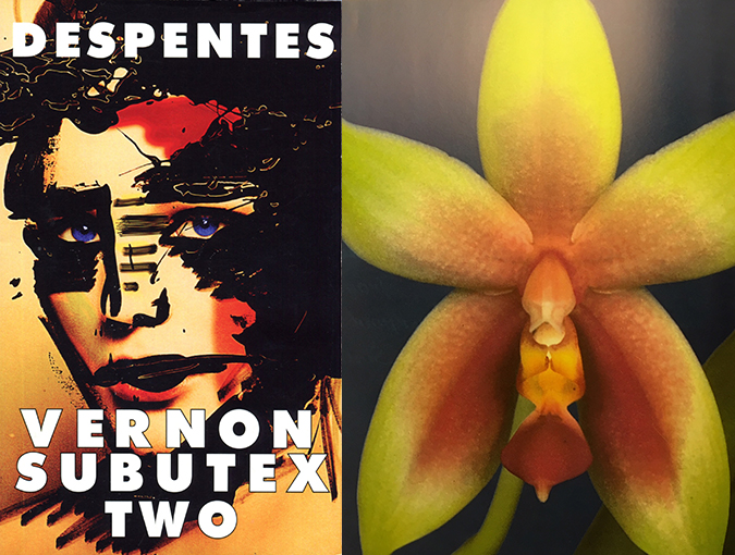 Review | Vernon Subutex 2, Virginie Despentes | Maclehose Press