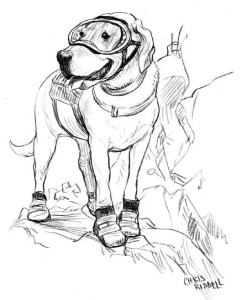 chris riddell copyright illus Country to Call Home
