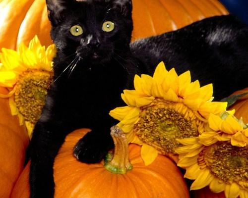 Ocazii împrumutate, păreri împărțite: Ce faci de Halloween-ul ăsta?