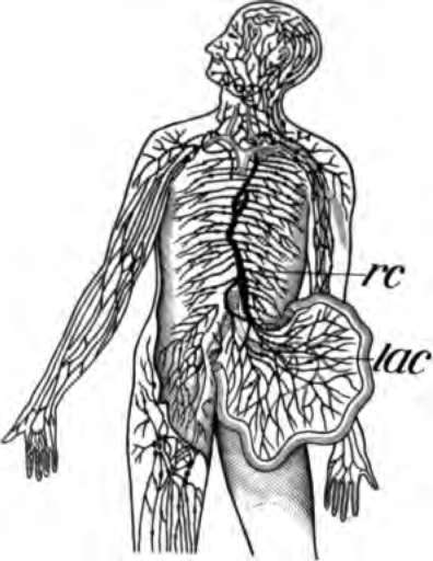 Thoracic spinal tumor surgery leg pain [thoracic exercises
