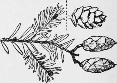 XV. Forestry