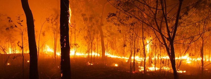An Australian bushfire of the kind that forms the background to Ash Mountain, a novel by Helen Fitzgerald