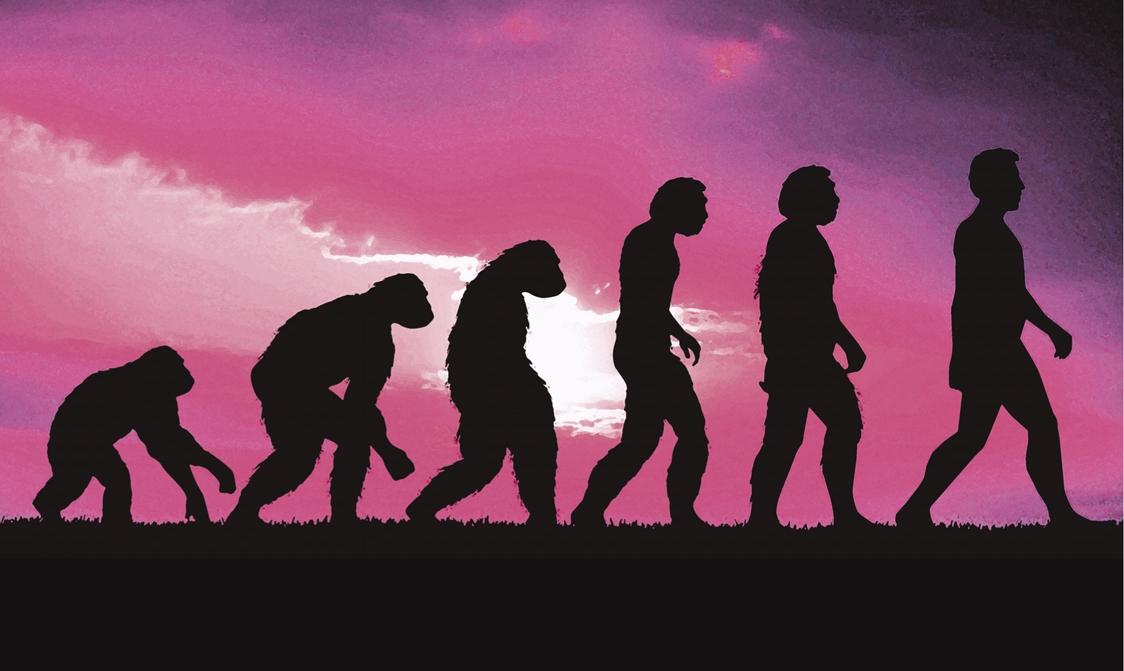 Cum au evoluat organele reproducătoare umane faţă de cele ale primatelor - echipament-saloane.ro
