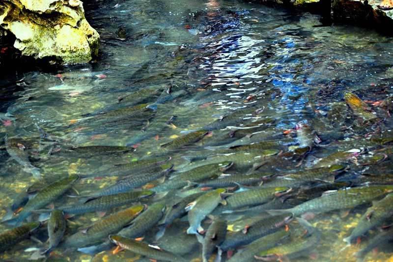 từ sầm sơn đến suối cá thần bao nhiêu km