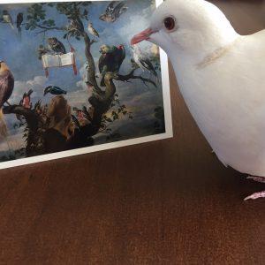 Kaart vogelconcert met duif