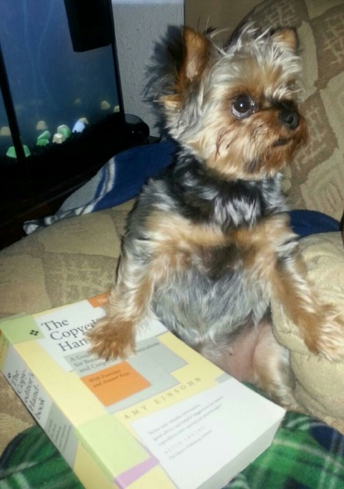 CHARLIE STUDYING