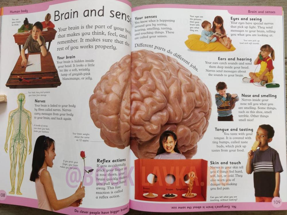 medium resolution of first children s encyclopedia a first reference book for children