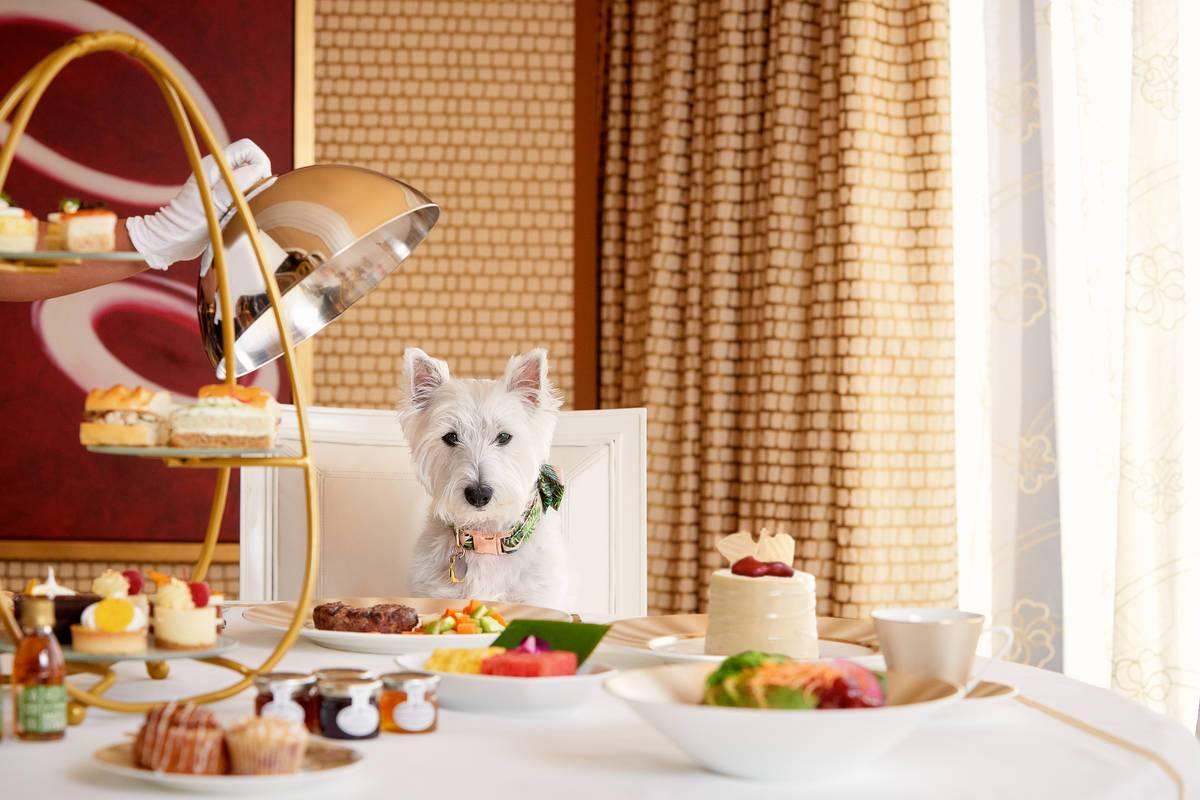 Казино Strip resort запустил специальную программу обслуживания собак