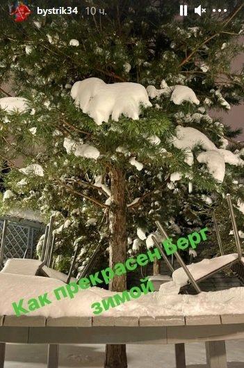 Быстров снова сравнил Берга с деревом