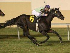Tricky Causeway - лошадь, приносящая удачу