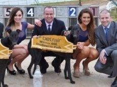 Betfair сэкономит на вкладах в индустрию собачьих бегов почти миллион фунтов в год