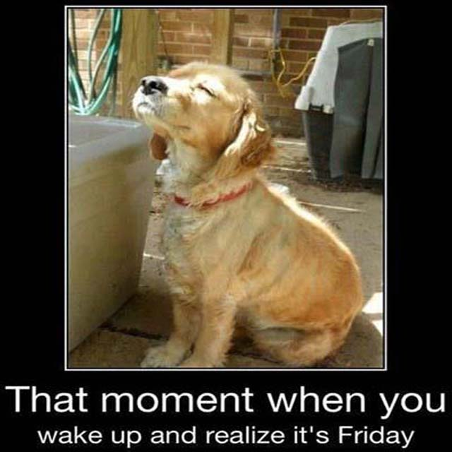 Friday Dog: The moment when you wake up and realize it's Friday. #TGIF #FridayFun