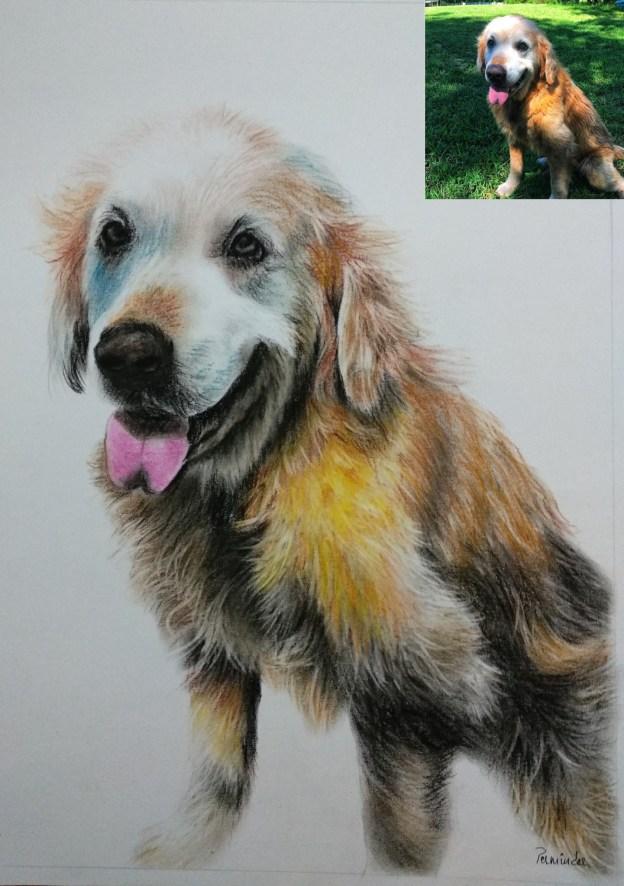 Pet pencil Drawing