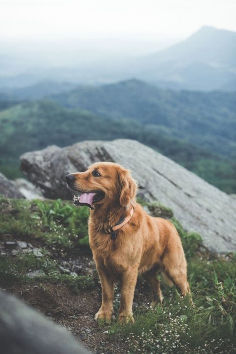 Dogs on maountais