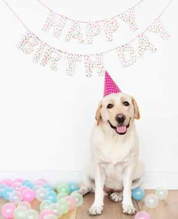 Dog Birthday pose