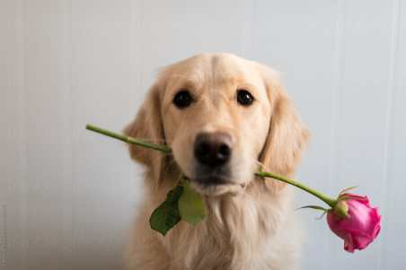 dog having flowers in mouth