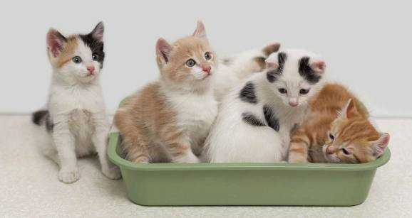 Cats are cleaner than dogs