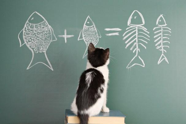 Cats are intelligent