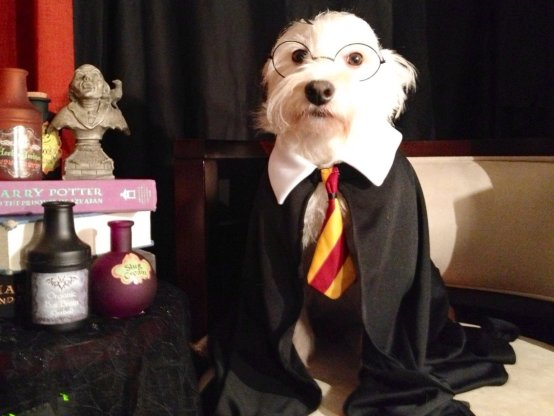 Harry Potter Themed Dog Costume