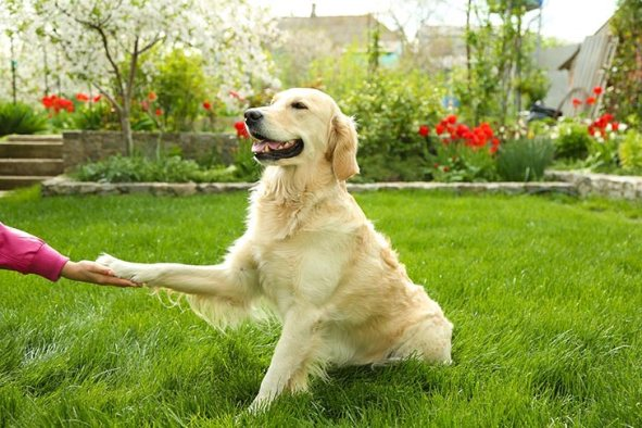 Teach your dog to 'Shake Hands'