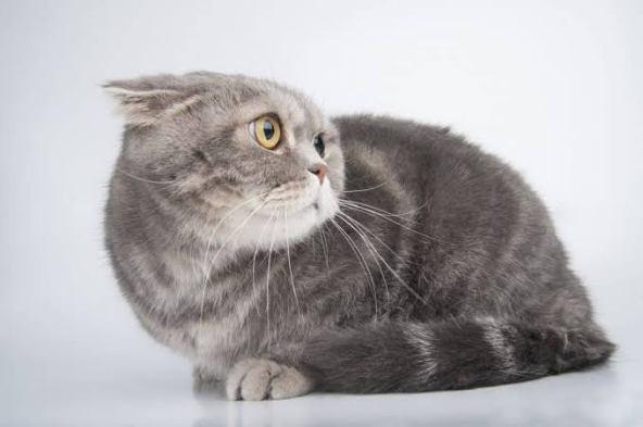 A Scared Cat