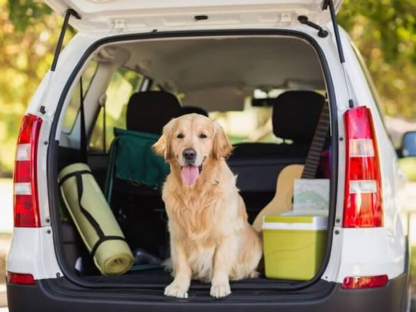 Travel with a Dog in a Car