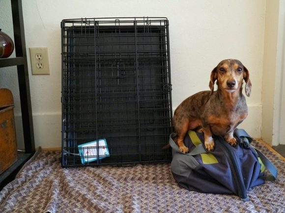 Dog Crates to Travel with a Dog