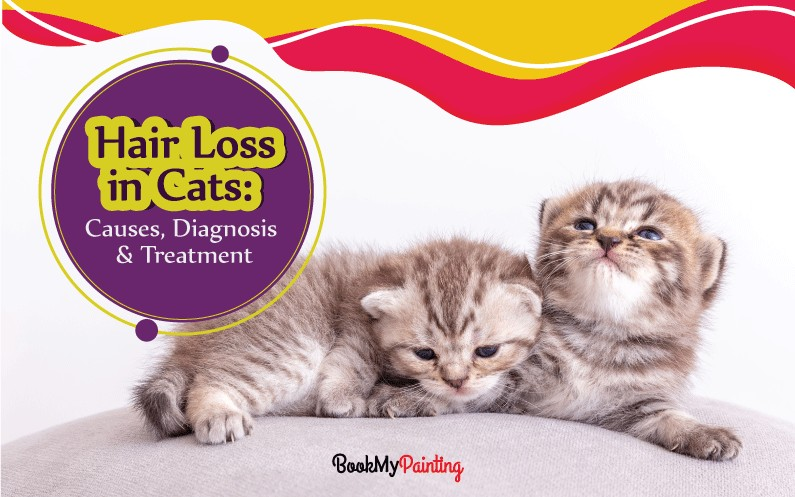 Huge Hair Loss in Cats: Causes, Diagnosis & Treatments (2020)