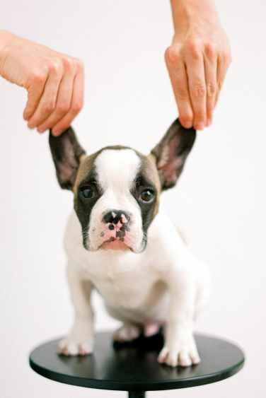 Why clean dog ears?
