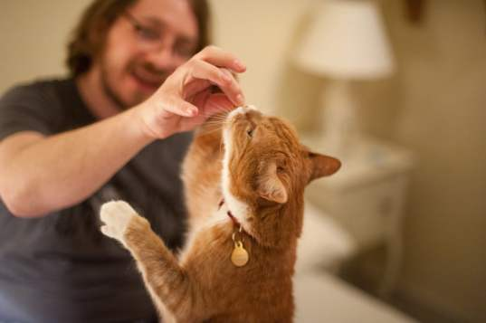 Treats for Cats (litter train a cat)