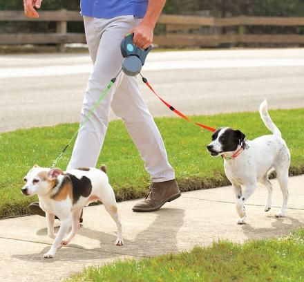 Walk your dog frequently