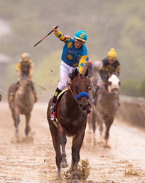 Pharoah - Triple Crown Winner 2015