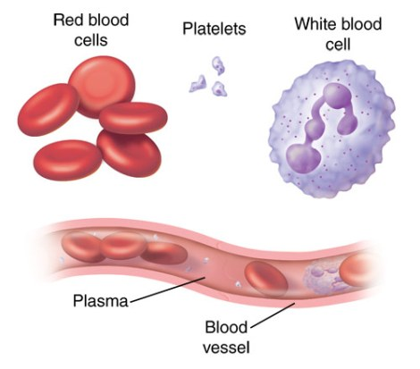 red blood cells, white blood cells, platelets