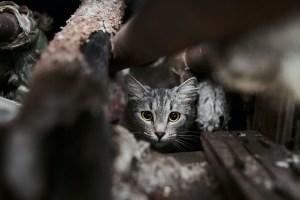 Essay on Animal conservation