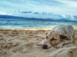A dog's final goodbye