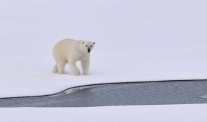 Climate change - It's real and we need to act now
