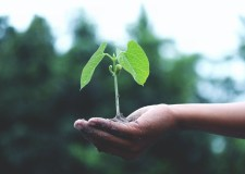 Save Nature – Plant More Trees, The Clock Is Ticking | Bookosmia