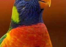 Bird Sanctuary – I Want To Be A Free Bird, Not A Zoo Bird | Bookosmia